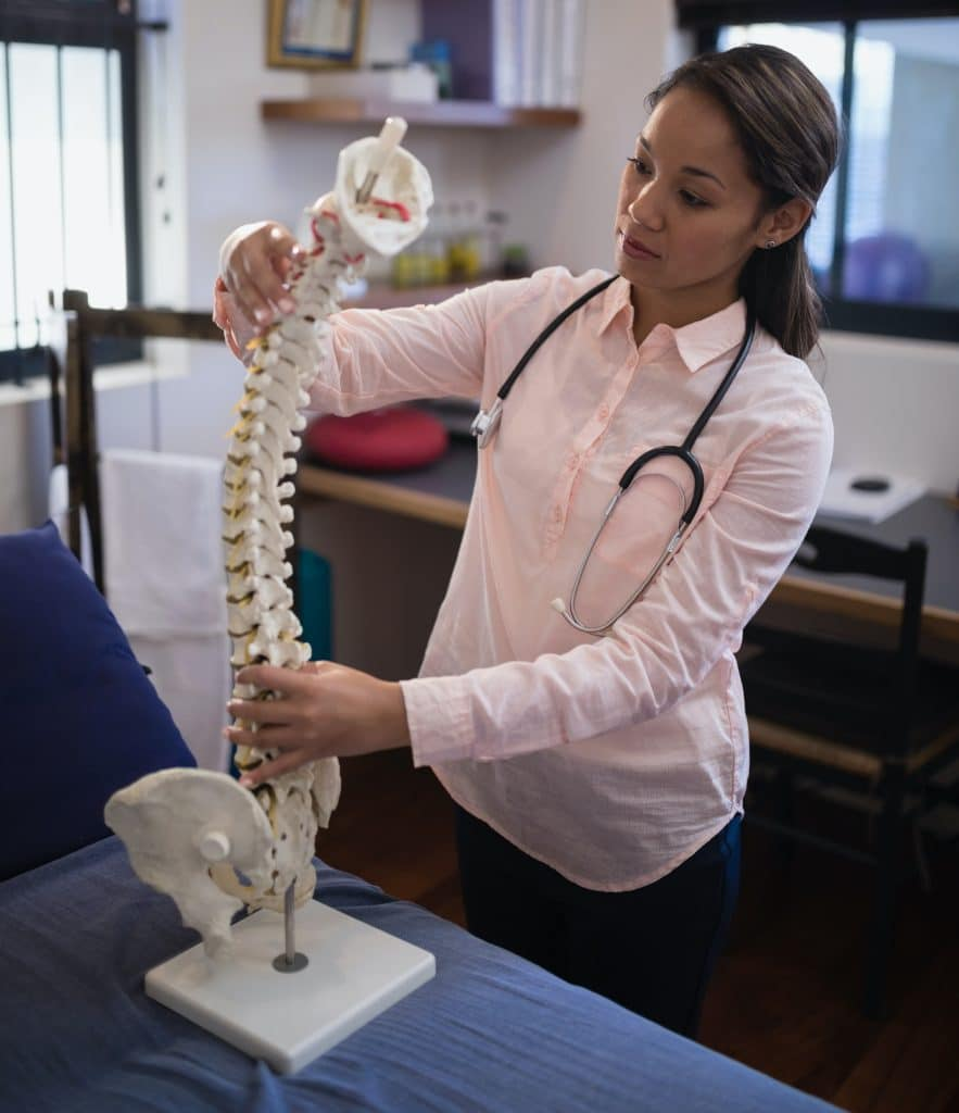 female chiropractor holding a model of the human spine